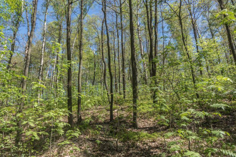 Waldgrundstück waldgrundstück in chemnitz adelsberg realis